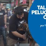 Taller Peluquería Canina