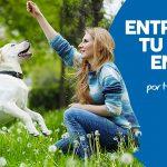 Formas de Entrenar a tu perro en Casa